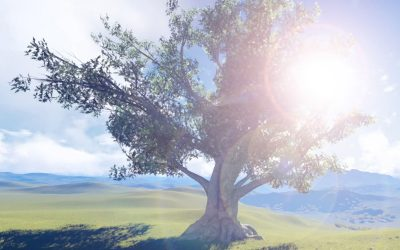 Why the tree is a metaphor for publishing